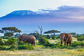 Two Elephants and Kilimanjaro mountain