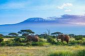 Two Elephants and Kilimanjaro mountain