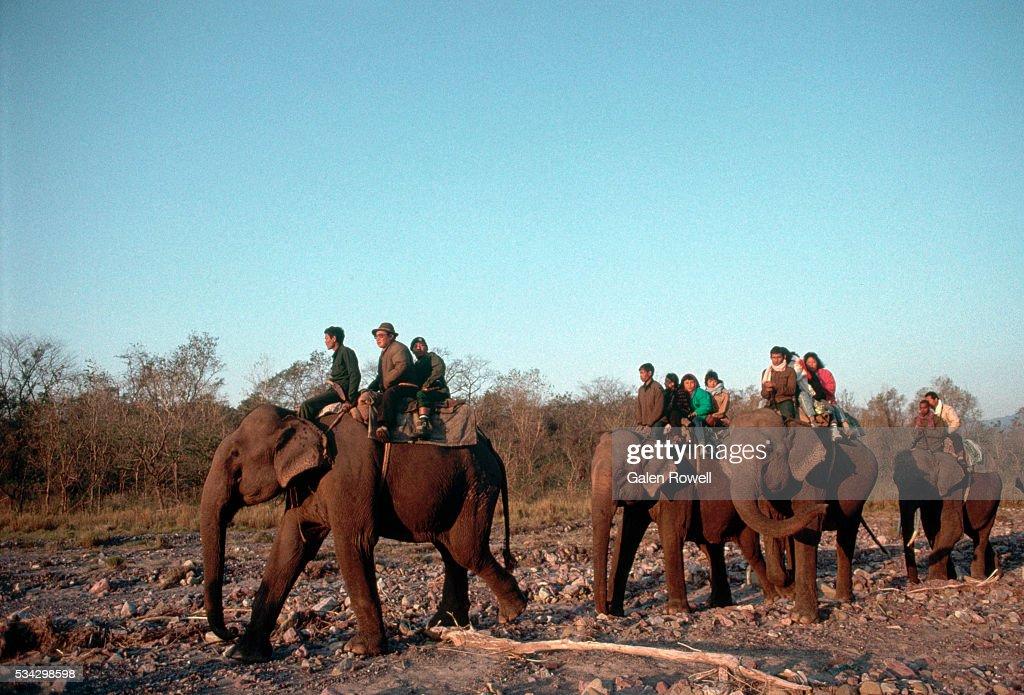 Elephants And Mahouts, Bhutan