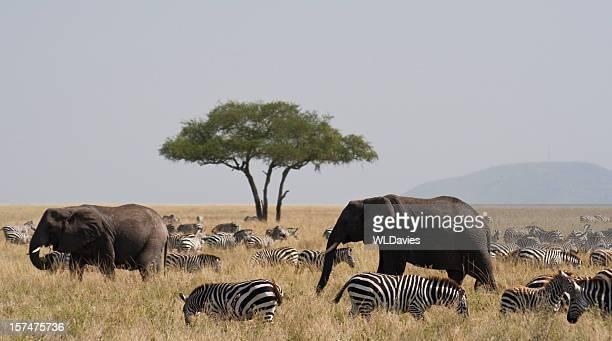 象とゼブラのセレンゲティ