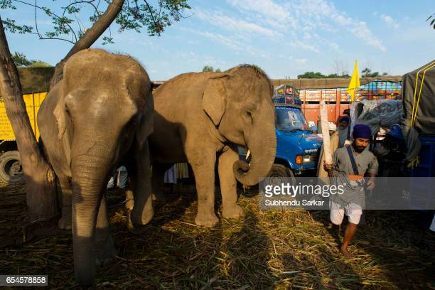 Elephants are also brought to ride on during Hola Mohalla festival Hola Mohalla is a threeday festival started by the tenth Sikh Guru Govind Singh...