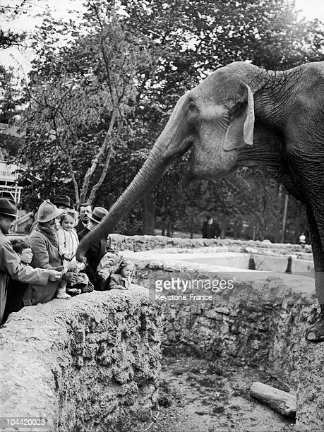 Elephants Are The Favorite Animal Of Children Who Try To Make Them Grab Things At The Children'S Zoo Of The Bois De Boulogne On April 18 1938