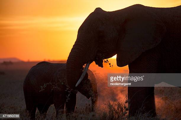 Elephants at sunset, Africa