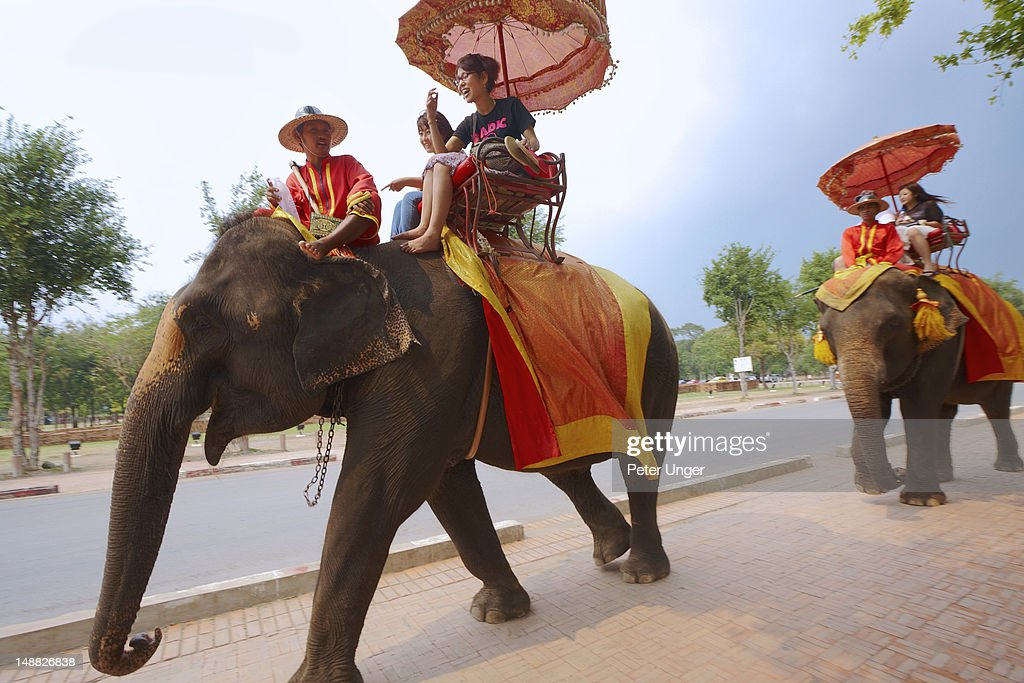 Elephants carrying tourists around Ayutthaya Historical Park. : Stock Photo