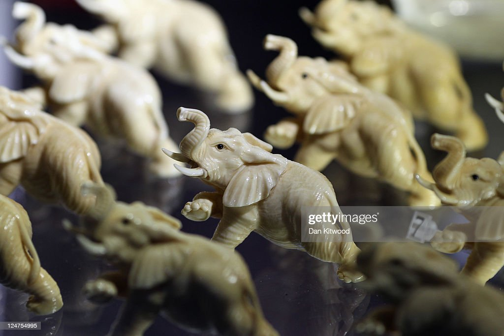 Elephants carved from illegal Ivory are displayed at an 'Endangered Species' exhibition at London Zoo on September 12, 2011 in London, England. The exhibition is organised by 'Operation Charm', a Metropolitan Police partnership aimed at tackling the illegal trade in endangered wildlife and runs for one month at London Zoo. Items include a 10 week old stuffed Tiger cub, the tooth of a sperm whale, Ivory carvings, and a stuffed Tiger.