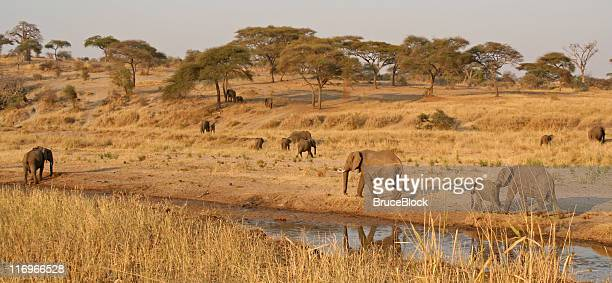 Elephants dotting the landscape