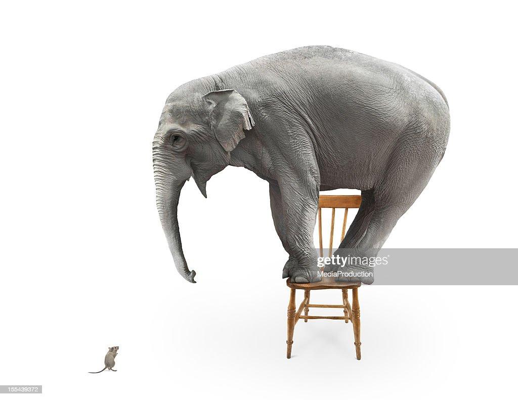 Elephant's fear of mice : Stock Photo