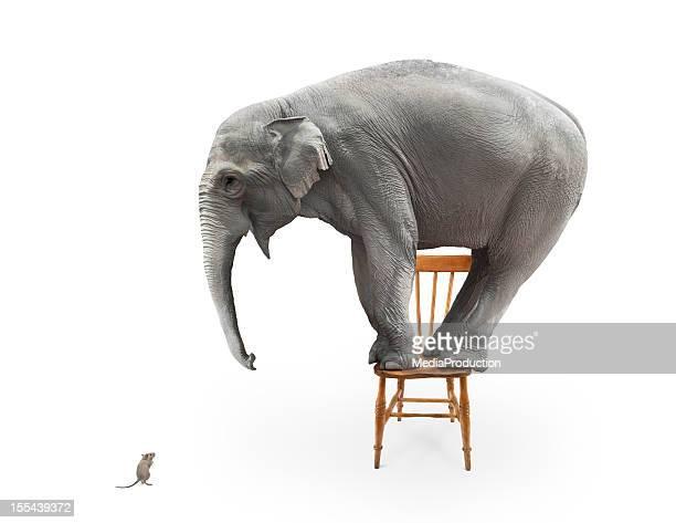 Elefante de medo de ratinho
