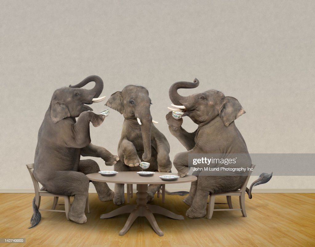 Elephants having tea party : Stock Photo