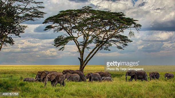 Elephants heading for the waterhole