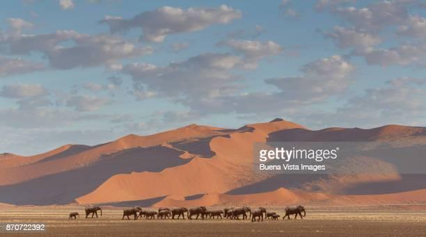 Elephants herd in the desert.