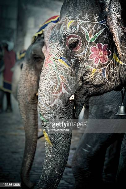 Elephants of India