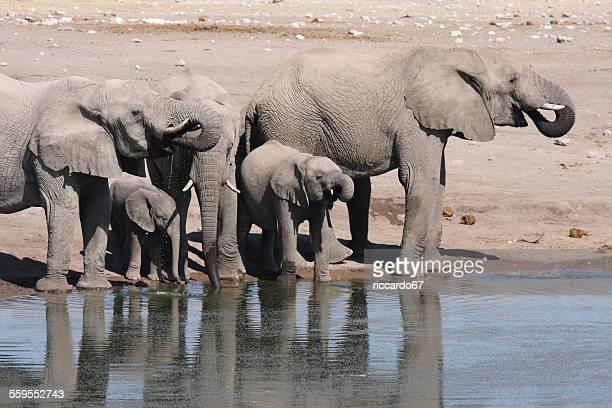 Elephants On Lakeshore
