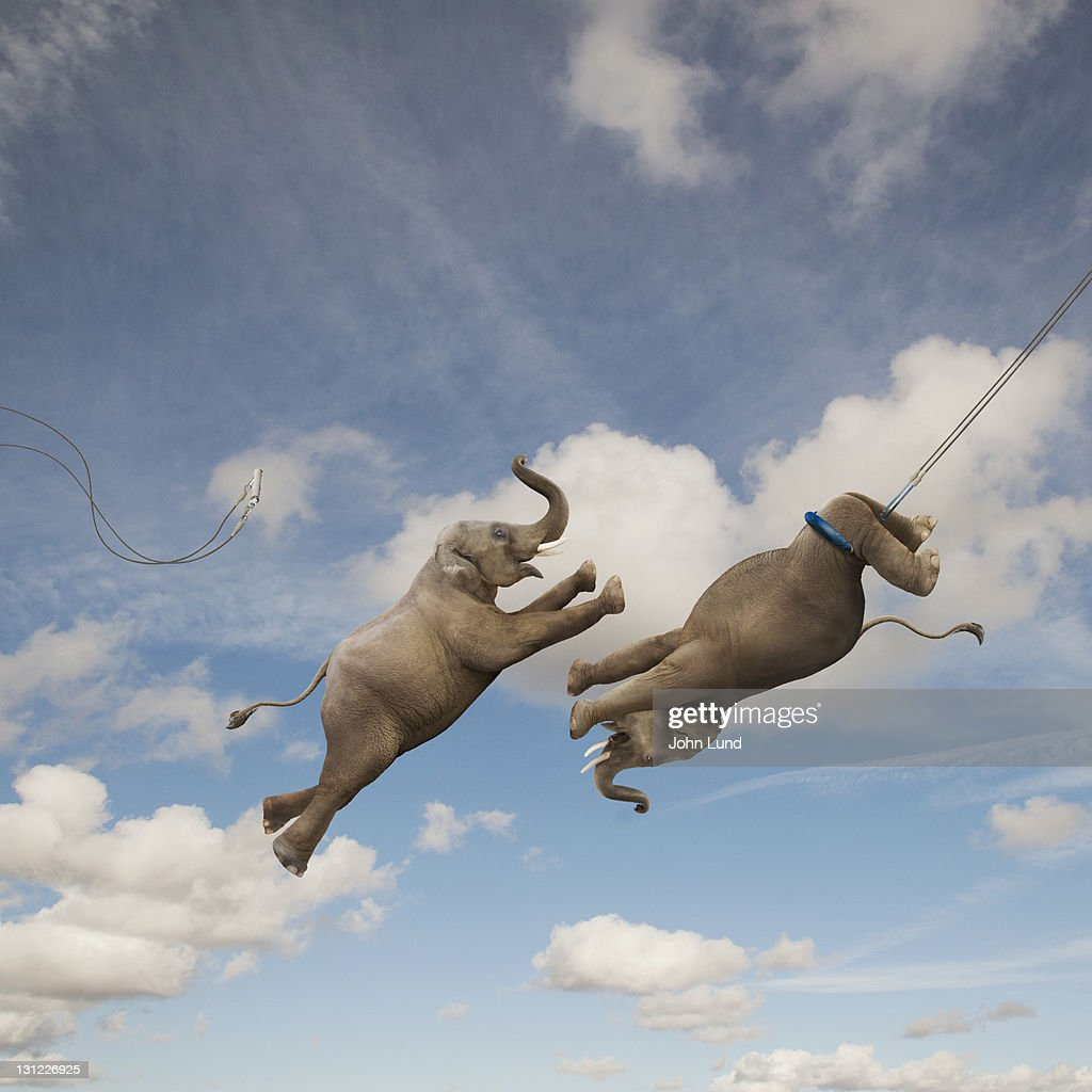 Elephants performing the Flying Trapeze : Stock Photo