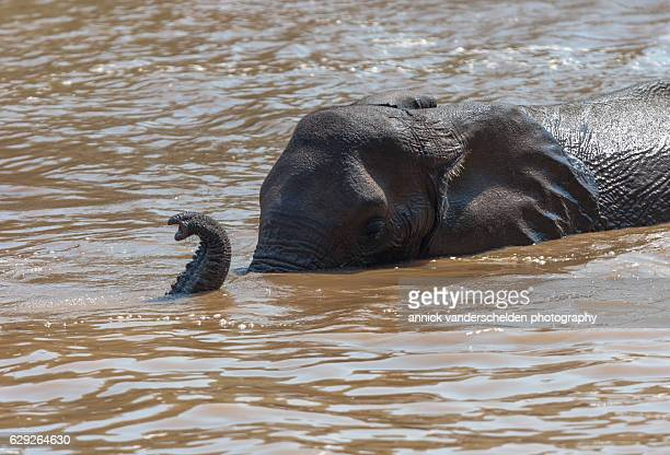 Elephants playing in water.