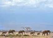 Elephants troop to a water hole at the Amboseli national reserve November 13 2015 at the foot of Mt Kilimanjaro The first delegation of the...