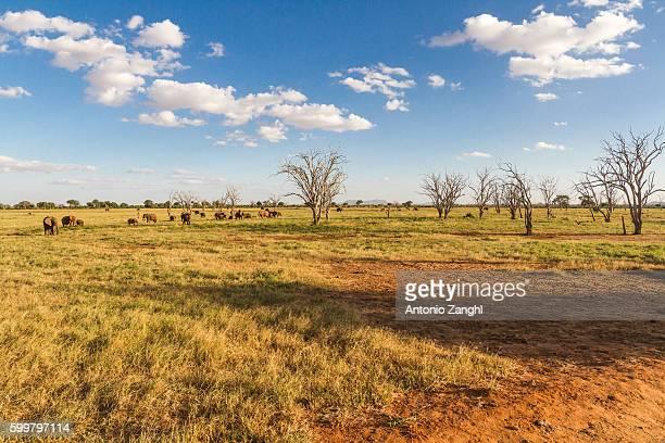 Elephants Tsavo East National Park in Kenya