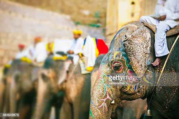 象が待っている