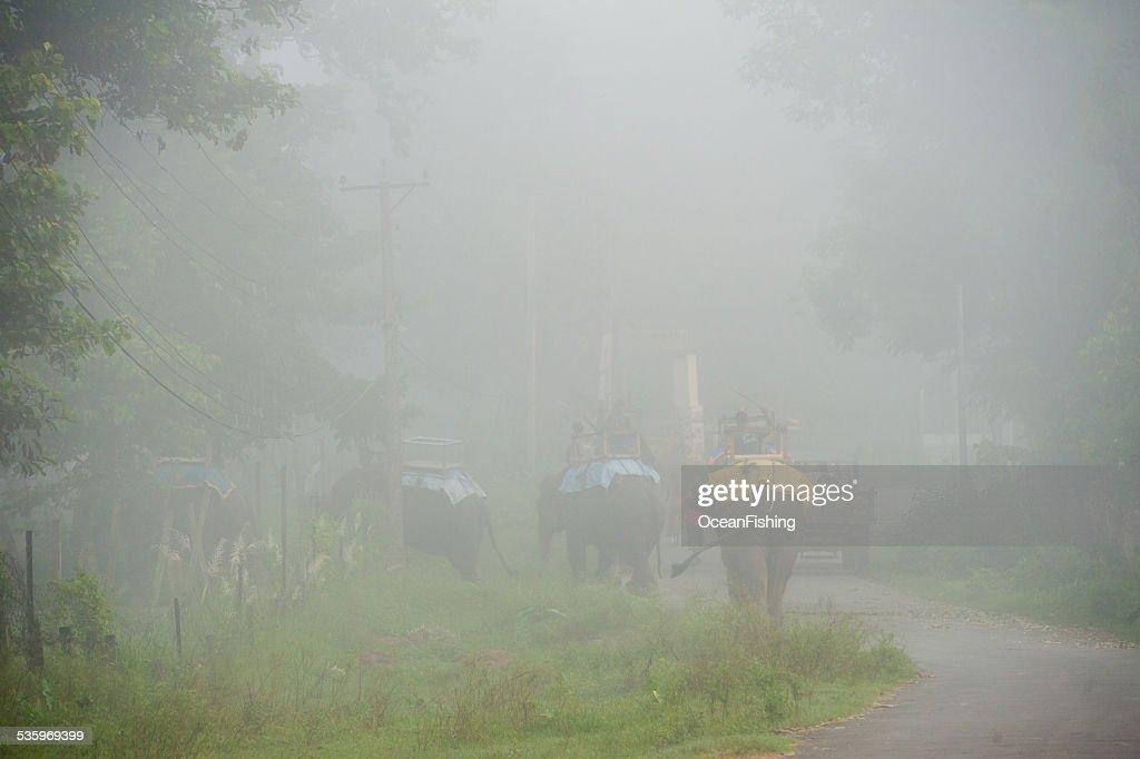 Elephants walking in the fog, Nepal : Stock Photo