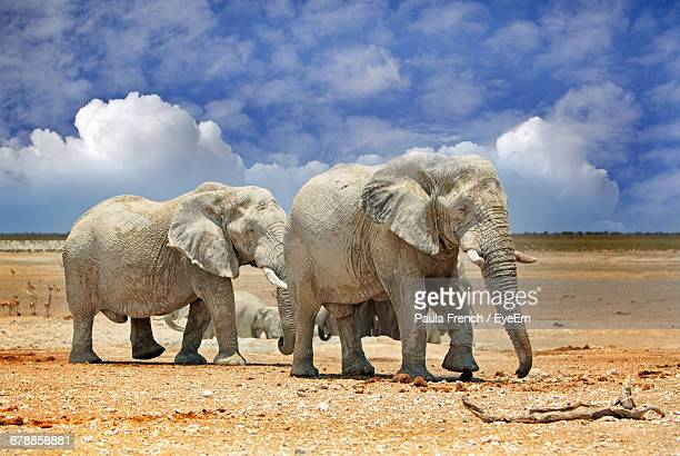 Elephants Walking On Field Against Cloudy Blue Sky At Etosha National Park