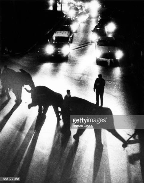 Elephants with the Ringling Bros and Barnum Bailey Circus go through Charles Street Circle as they make their way to the Boston Garden from their...