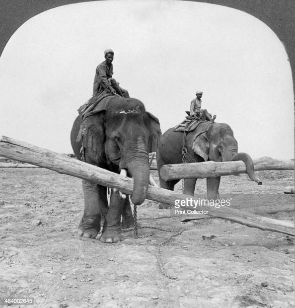 Elephants working in a lumber yard Rangoon Burma 1908 Stereoscopic card Detail