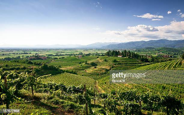 Elevated landscape view of vineyards