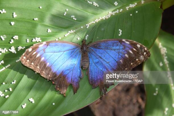 Elevated view of butterfly on leaf