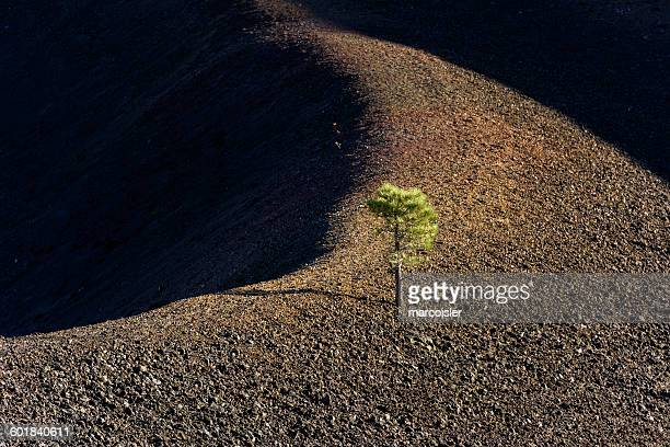 Elevated view of cinder cone tree in lava beds, California, America, USA