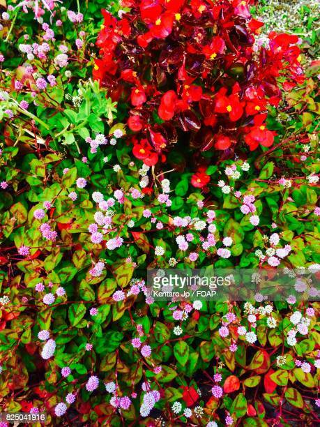 Elevated view of multi coloured flowers