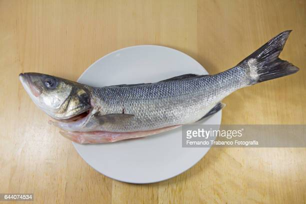 Elevated view of sea bass on a plate