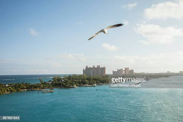 Elevated view of seagulls flying over Nassau, Bahamas