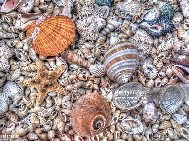Elevated view of seashell