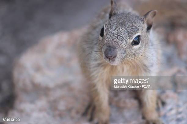 Elevated view of squirrel