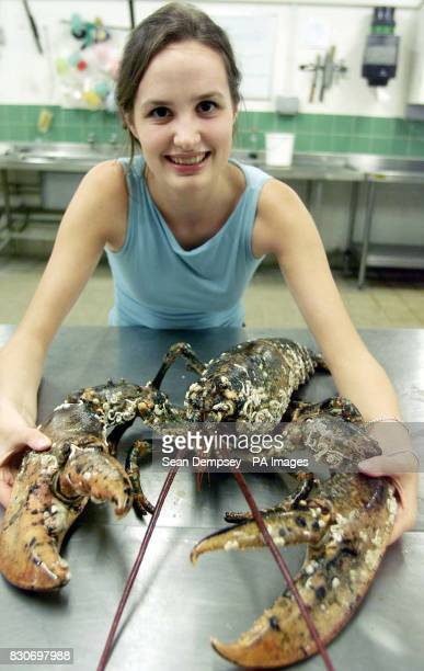 Elizebeth Downey Education Manager at the London Aquarium with Barney the one metre long lobster at the Aquarium in central London *Barney was saved...