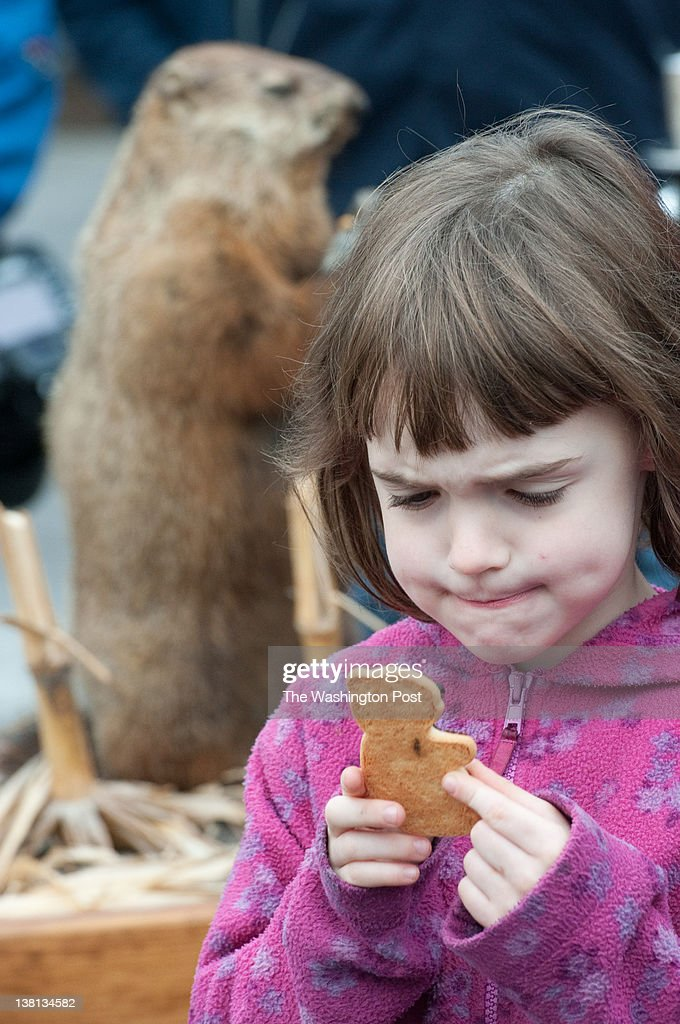 Ellen Lurie, 6, of DC, studies her groundhog cookie at the event. A stuffed groundhog, 'Potomac Phil', predicted six more weeks of winter during Washington DC's first annual groundhog day celebration in Dupont Circle. Ward 2 councilman Jack Evans and other local politicians were in attendance.