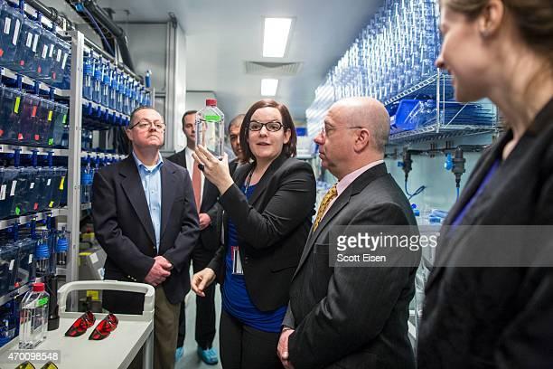 Ellen Van Rooijen post doctoral researcher at the Zebrafish Lab displays Zebrafish with melanoma at Boston Children's Hospital on April 17 2015 in...