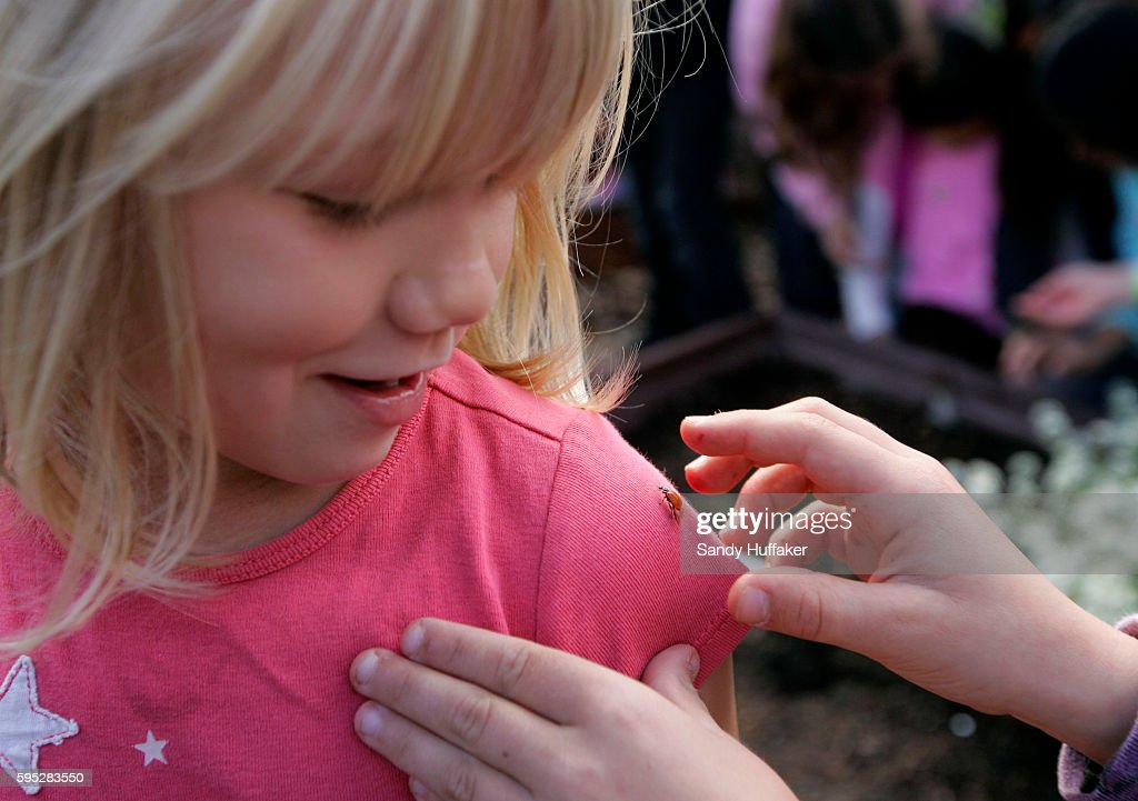 Ellery Walker has a Ladybug taken off her shirt at the Octopus Garden on Tuesday March 22 2011 in San Diego CA Gardening has become a popular...