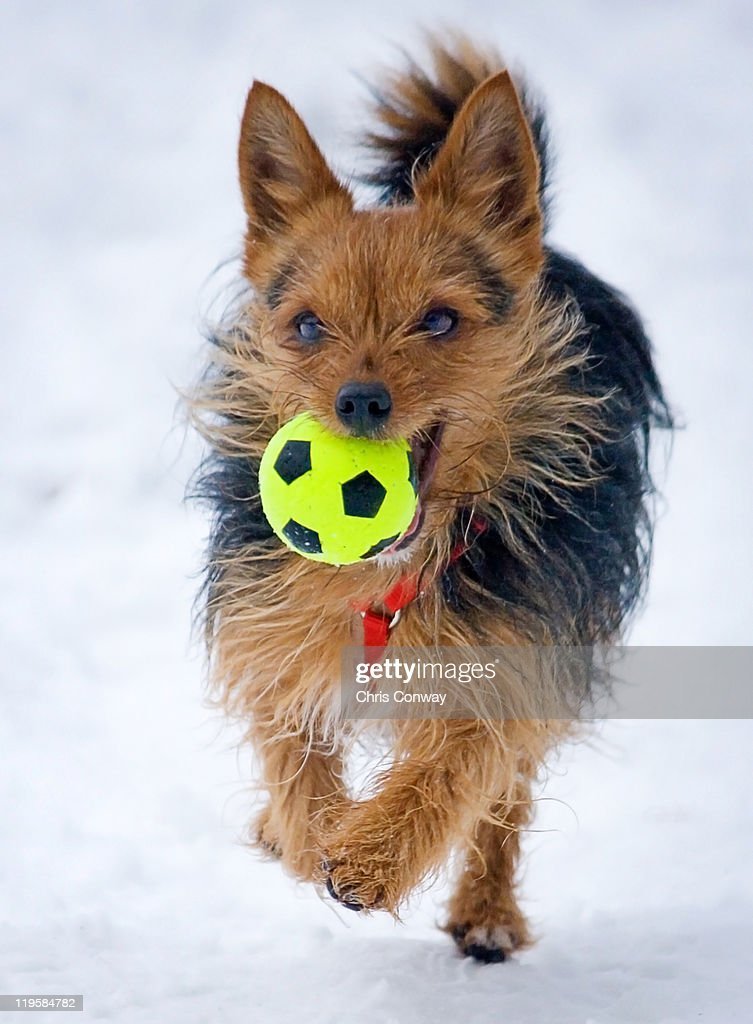 Elly in  snow. : Stock Photo