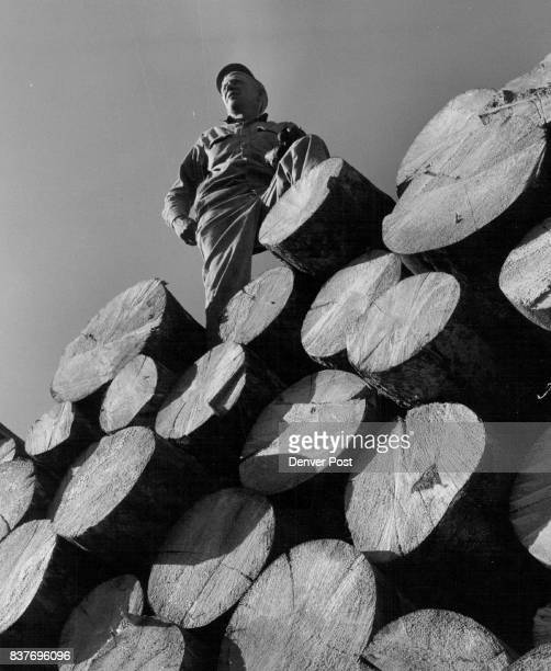 Elmer Gustafson of Yampa Colo Stans atop a stack of beetlekilled spruce on its way to Wisconsin paper mills Gustafson is employe of Carl Edman Co...