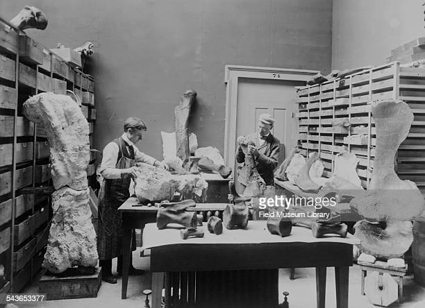 Elmer Riggs the first curator of Fossil Mammals and field laboratory assistant Harold W Menke preparing Grand Junction Colorado fossils including the...