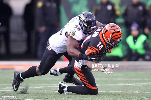 Elvis Dumervil of the Baltimore Ravens sacks Andy Dalton of the Cincinnati Bengals during the third quarter at Paul Brown Stadium on January 1 2017...