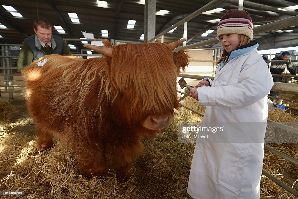 <a gi-track='captionPersonalityLinkClicked' href=/galleries/search?phrase=Emily+Armstrong&family=editorial&specificpeople=5310796 ng-click='$event.stopPropagation()'>Emily Armstrong</a>, aged 7, from Tiree prepares a calf for show as farmers gather for the 122nd Highland Cattle Society spring sale at Oban Livestock centre on February 11, 2013 in Oban, Scotland. The show and sale held over two day's is open to all highland breed enthusiasts, attracting many buyers from across Europe and North America.