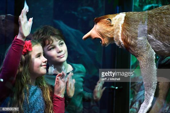 Emily Mann and Lucas HashemFord view a Proboscis monkey during a press preview for a new taxidermy exhibition on December 8 2016 in Edinburgh...