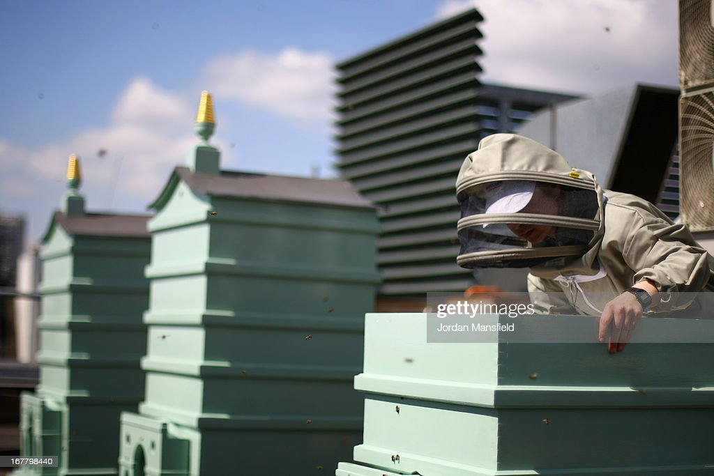 Emily Reed tends to the beehives on the rooftop of Fortnum and Mason on April 30, 2013 in London, England. Fortnum and Mason have kept bees on their rooftop terrace for the last 7 years. At this time of year, the London Honey Company return the bees to their renovated hives.
