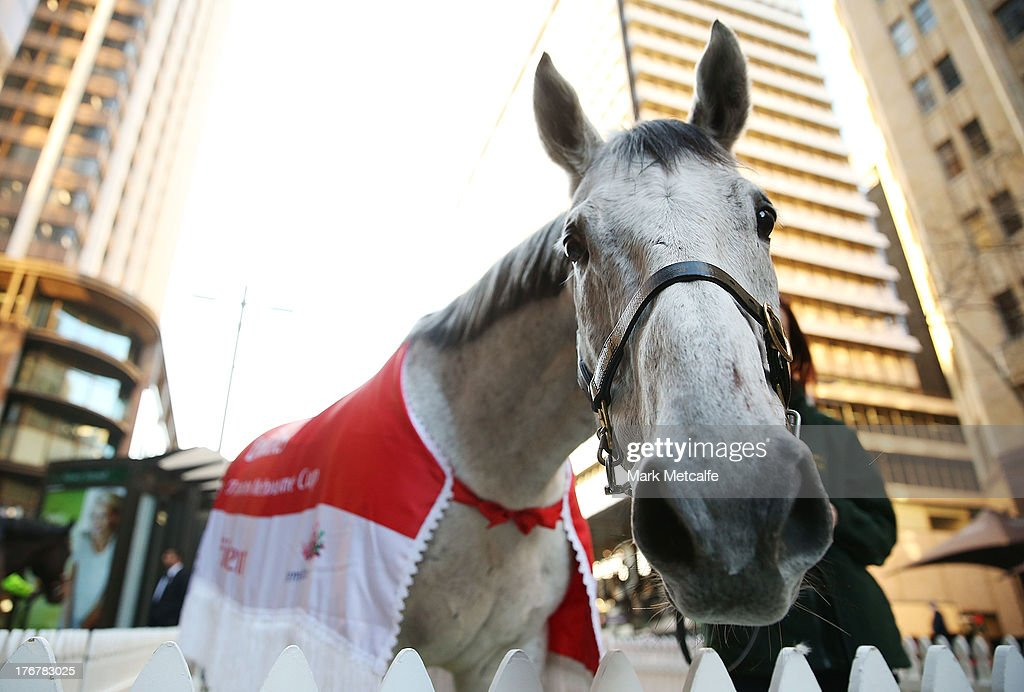 Emirates Melbourne Cup winning horse Efficient is seen in Martin Place on August 19, 2013 in Sydney, Australia.