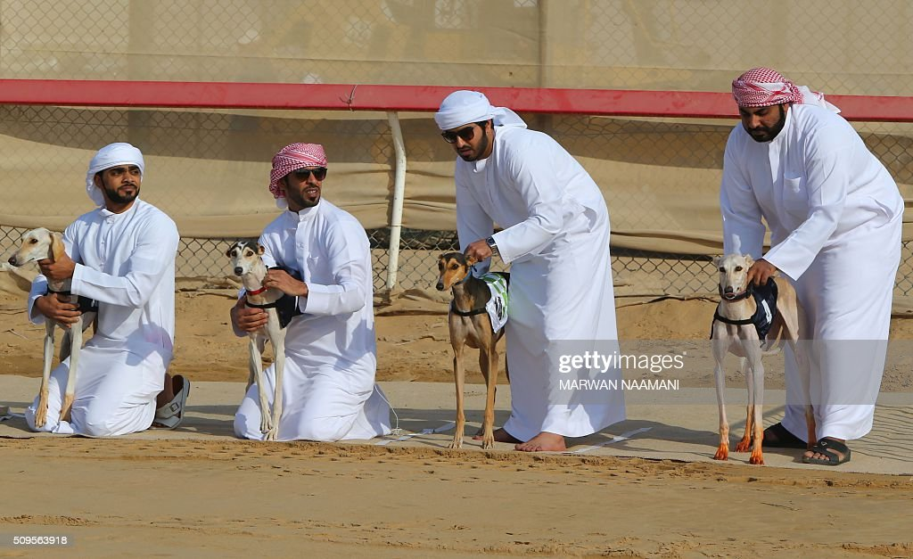Emirati men wait with their Arabian saluki dogs for the start of the traditional annual dog race in Shweihan on the outskirts of Abu Dhabi on February 11, 2016. The race gives owners of Arabian pure-bred salukis the opportunity to test the abilities of their hounds in a traditional, natural desert setting. / AFP / MARWAN NAAMANI