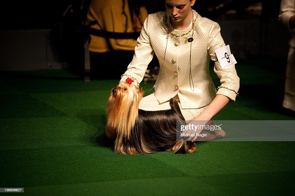Emma Echols competes with her Yorkshire Terrier 'Tucker' in the Junior Showmanship Preliminaries at Westminster Kennel Club Dog Show on February 13, 2012 in New York City. The Westminster Kennel Club Dog Show first held in 1877, is the second-longest continuously held sporting event in the U.S., second only to the Kentucky Derby.