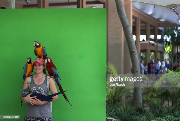 Emma Klapish on vacation from Australia interacts with parrots at Jungle Island as Florida Governor Rick Scott announces that the number of tourists...