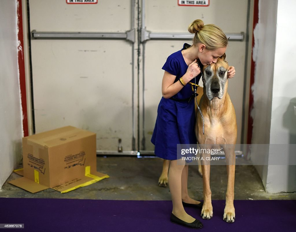 Emma Rogers from Columbus New Jersey and Great Dane 'Joy' in the benching area at Pier 92 and 94 in New York City on the 2nd day of competition at...